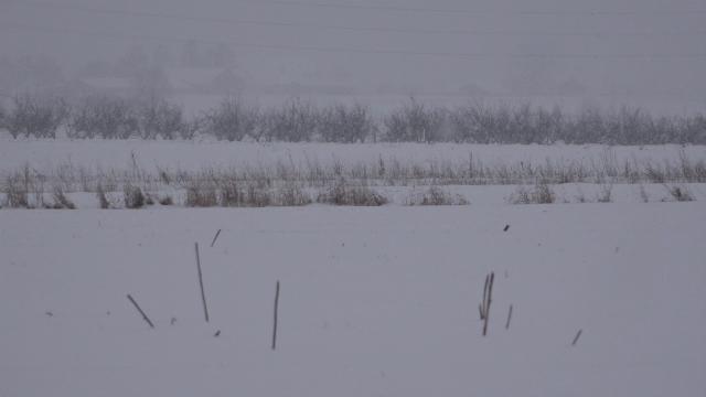 Rana prolećna setva će kasniti zbog snega