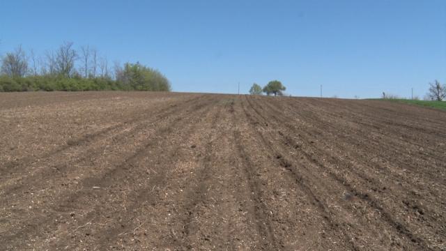 Kukuruz će u Sremu biti posejan na oko 100 000 hektara