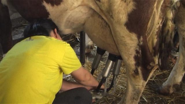 Pravilna higijena proizvodnje mleka