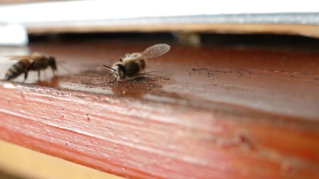 Stop trovanju pčela