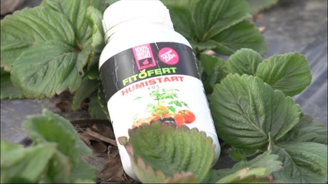 Aminofleks, Humistart i Humisuper za uspešnu proizvodnju jagoda