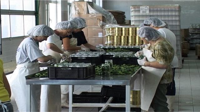 Nemačka firma traži kooperante za proizvodnju kornišona