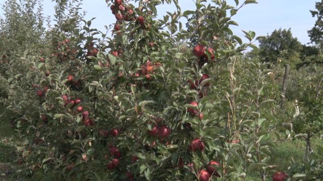 Strateški cilj opštine povećanje broja voćara