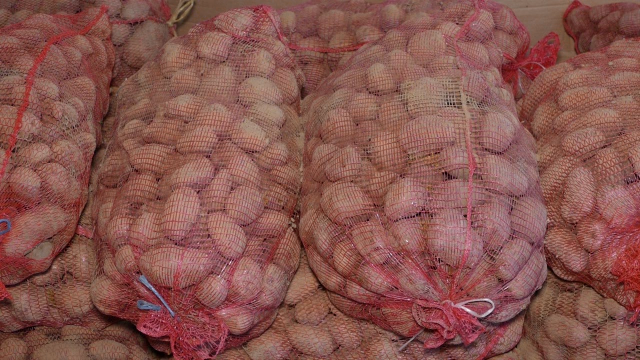 Krompir iz uvoza preplavio domaće tržište
