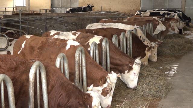 Promene u oblasti stočarstva u Sremu