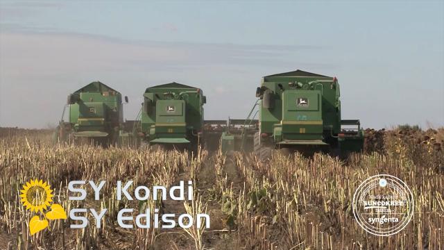 Hibrid Edison za rodno i zdravo polje suncokreta