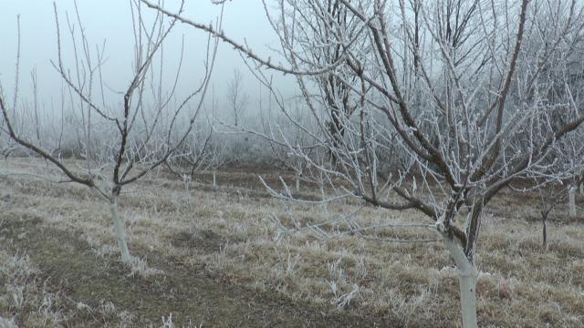 Mraz preti voću