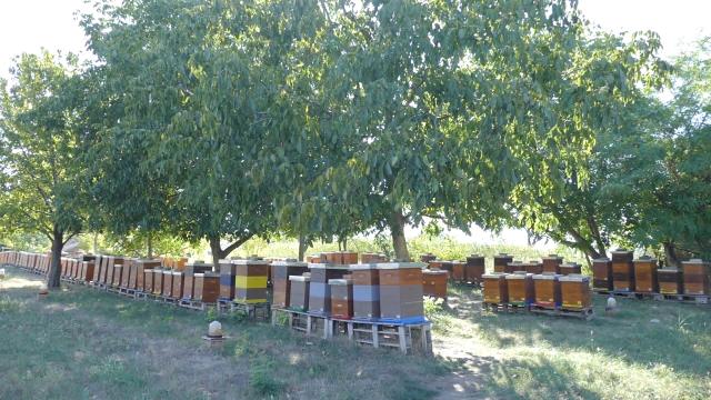 Pčelari sa nestrpljenjem čekaju novac