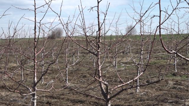 Niču novi zasadi voća u Šumadiji