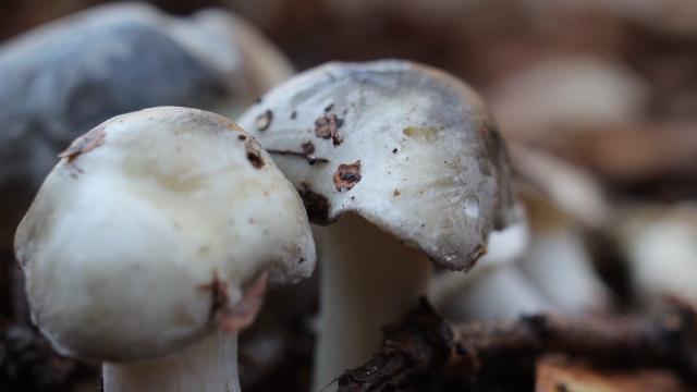 Porezi i doprinosi za šumske plodove, gljive i lekovito bilje