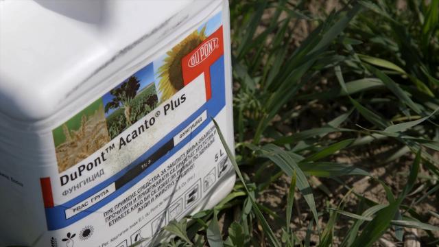 Acanto plus - dokazano efikasan u suzbijanju oboljenja strnih žita