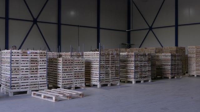 U uvozu najzastupljenije voće i povrće