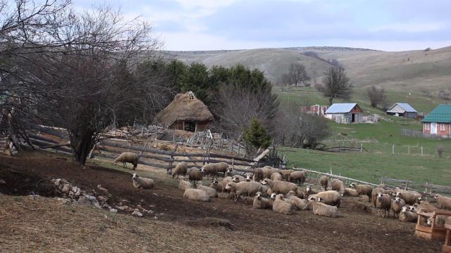 Na Pešteru je stočarstvo tradicija