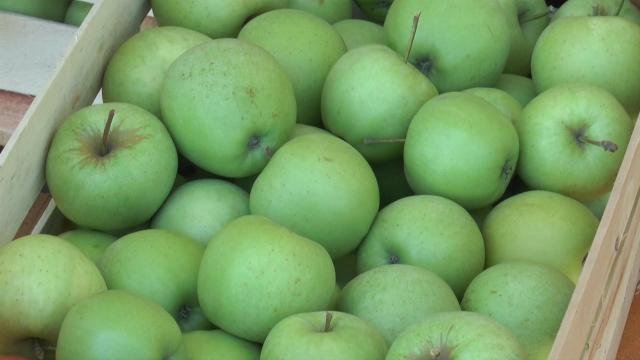 Kontrola uvoznika voća i povrća
