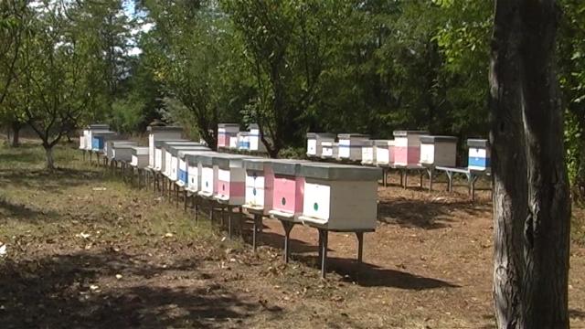 Pčelari se nadaju dobroj godini