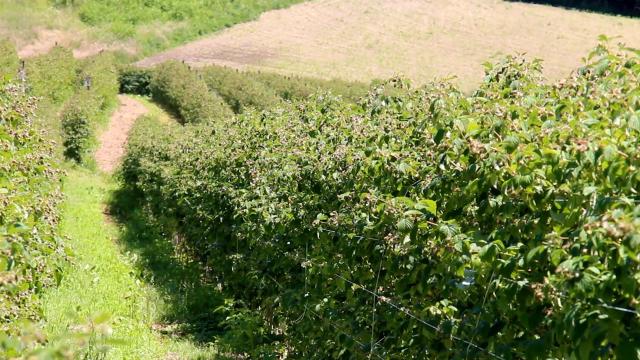 Setrifikovane sadnice preduslov za uspešnu proizvodnju