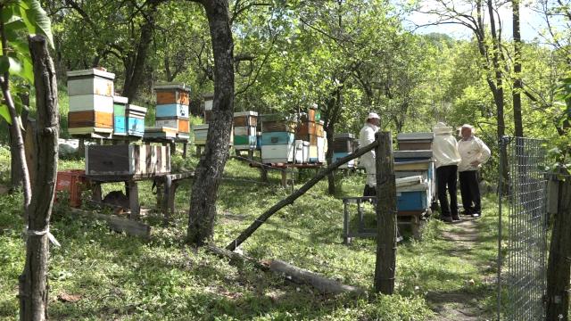 Šumadijski pčelari se nadaju boljoj sezoni