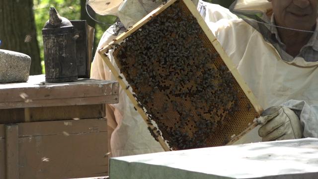 Pčelarenje na Rudniku po starim pravilima