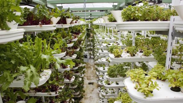 Inovacije u gajenju biljaka