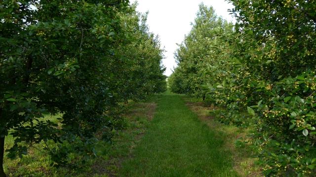 Višnja i jagoda trenutno najtraženija roba