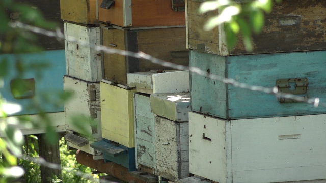 Pristojna zarada od pčelarstva