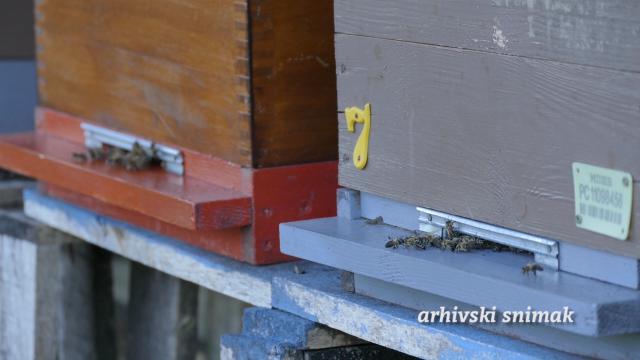 Masovno trovanje pčela u Kljajićevu