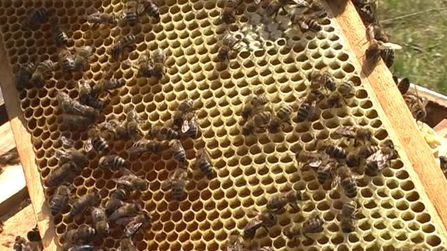 Med na točkovima