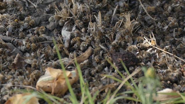 Otkrili njivu gde su pčele otrovane?