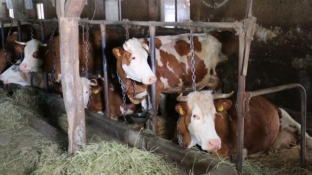 Škola u Požegi gradi mini mlekaru
