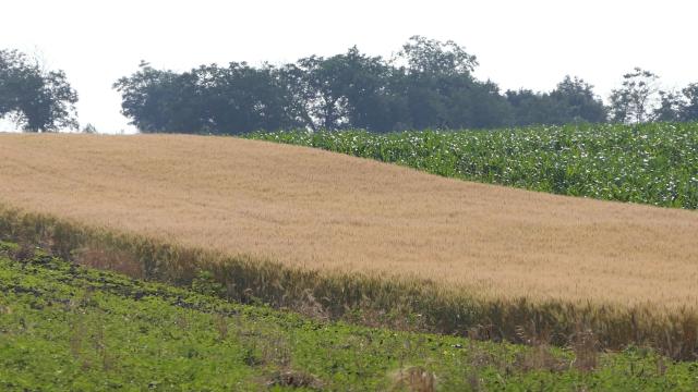 Sezonu obeležio veliki broj tretmana, naročito na pšenici