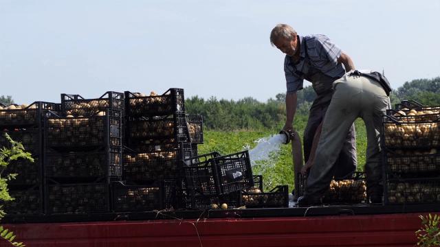 Proizvođači krompira zadovoljni rodom
