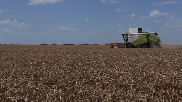 Dobar rod ječma, uskoro i žetva pšenice
