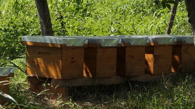 Dve-tri dobre paše vratile osmeh na lice pčelarima