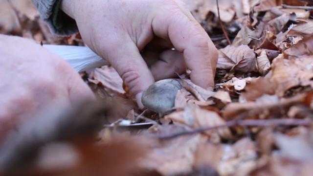 Na Divčibarama 24 obeležene gljivarske staze
