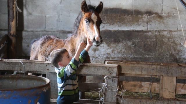 Uzgoj konja - ljubav i hobi