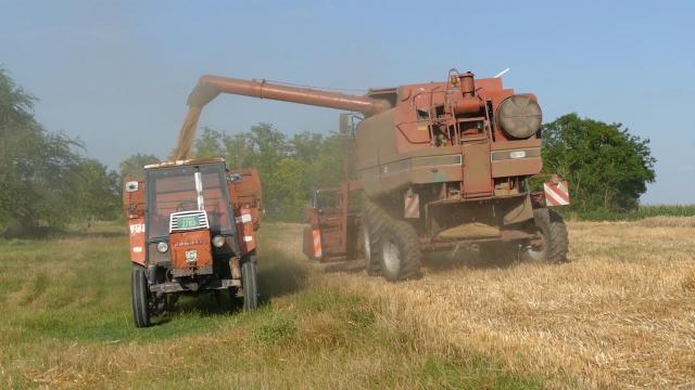 Direkcija za robne rezerve kupuje merkantilnu pšenicu