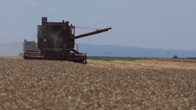 Gotova žetva pšenice, čeka se formiranje konačne cene
