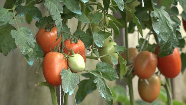 Organska poljoprivreda kao šansa za opstanak