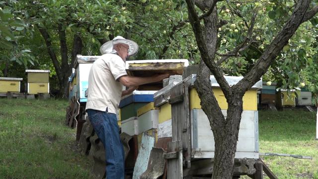 Priprema pčela za narednu sezonu