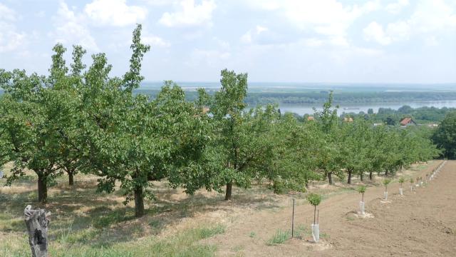 Posledice klimatskih promena ugrožavaju voćarsku proizvodnju