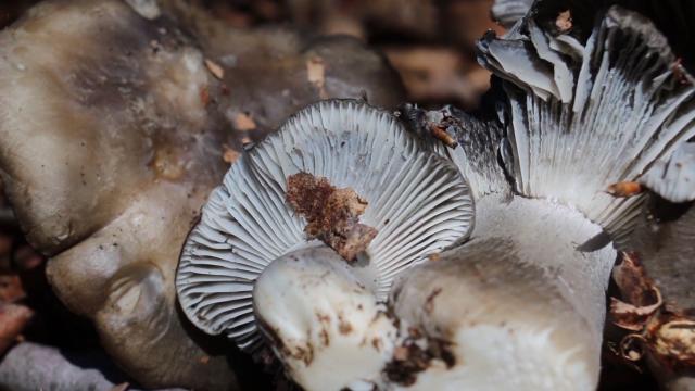 Berba gljiva u septembru, oktobru i novembru