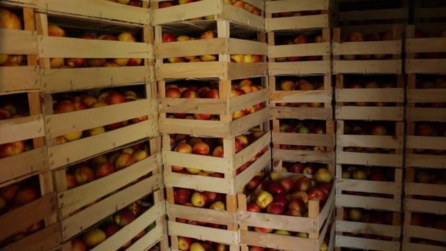 Veliki problem čuvanje voća