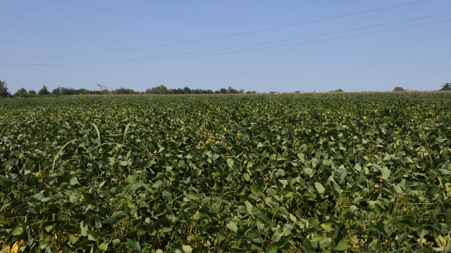 Makedonija razmišlja da promeni propise o GMO