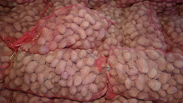 Krompira ima i za izvoz