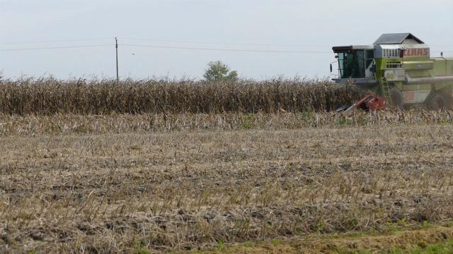 Ratari zadovoljni prinosom kukuruza, cena razočarala