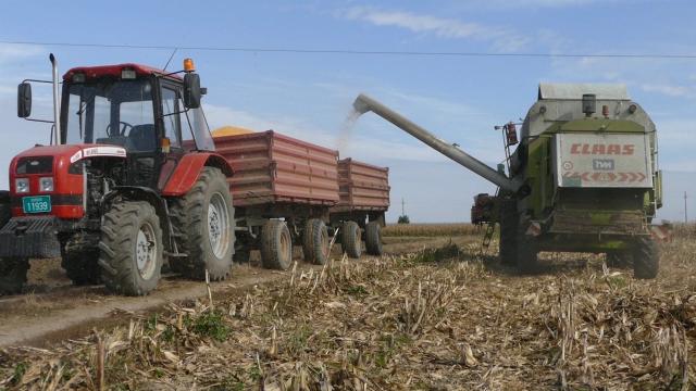 Nema uslova za rast cene kukuruza