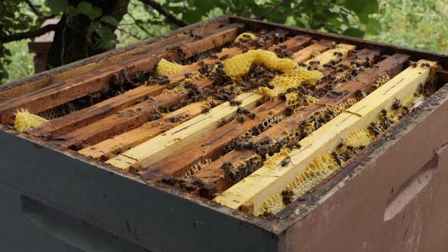 Subvencije za pčelare