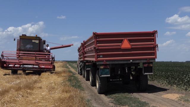 """""""Žitounija"""" traži uvoz pšenice, stručnjaci protiv"""