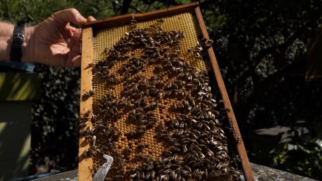 Mladi sve više zainteresovani za pčelarstvo