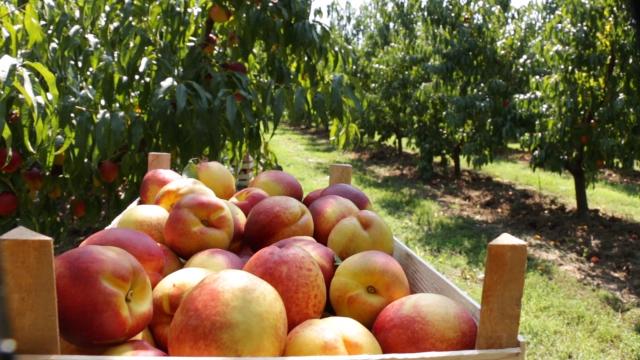 Sprečeno da se zaraženo voće nađe na slobodnom tržištu
